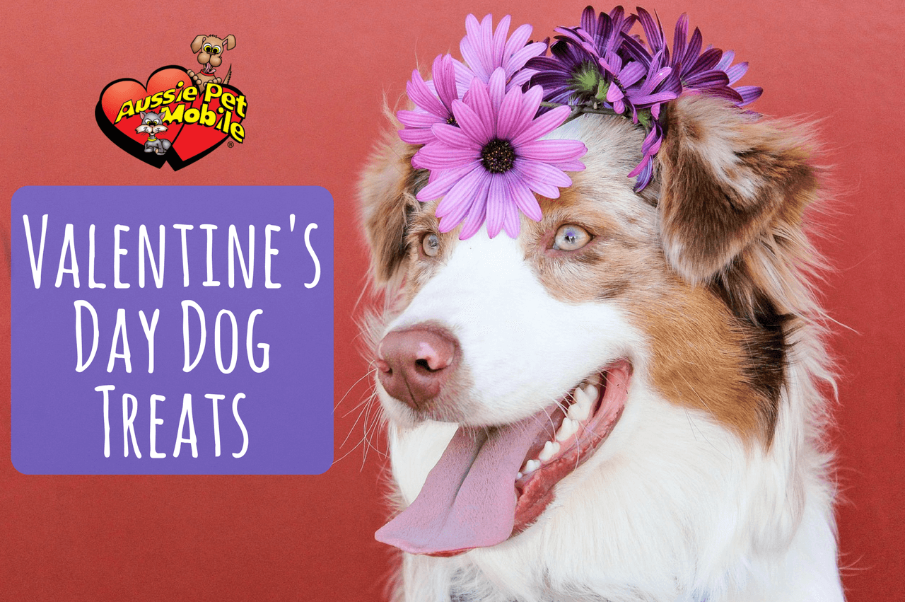 Gourmet dog treats for Valentine's Day. Find this Pin and more on Valentine Dog Treats by Frosting Fran. Gourmet dog treats for Valentine's Day. His and Hers designs.